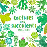 Cute cactus and succulent. Vector frame, banner, card, invitation templates. Cactus and succulent vector background. Cactus frame, banner, card, invitation Royalty Free Stock Image