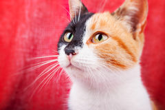 Cute Calico Cat stock image