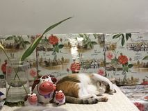 Cute Calico cat sleeping with ceramic cow dolls. Protecting her eyes from bright light with her arms royalty free stock images