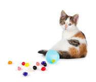 Cute Calico Kitten Sitting Next To Spilled Jelly Beans On A Whit Stock Photo