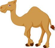 Cute camel cartoon Stock Photography