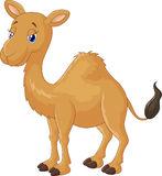 Cute Camel cartoon Stock Photo