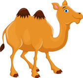 Cute camel cartoon Stock Image