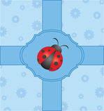 Cute card with ladybug Royalty Free Stock Photos