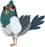 Cute and funny squint-eyed pigeon royalty free stock image