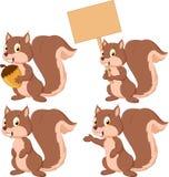 Cute carton squirrel collection set Stock Photos