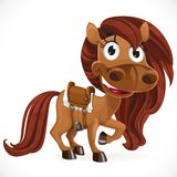 Cute cartoon baby horse Royalty Free Stock Photo