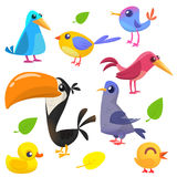 Cute cartoon birds collection. Cartoon set of colorful birds. Vector illustration Royalty Free Stock Images