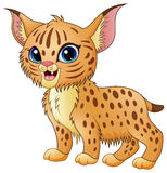 Cute cartoon bobcat. Illustration of Cute cartoon bobcat Stock Images