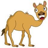 Cute Cartoon Brown Camel Desert Animal Stock Images