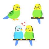 Cute cartoon budgie Royalty Free Stock Images