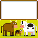 Cute Cartoon Bull, Cow And Calf With Space Royalty Free Stock Photography