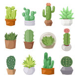 Cute cartoon cactus collection flat nature vector illustration. Royalty Free Stock Photography
