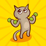 Cute cartoon Cat with dumbbells Stock Images