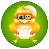 Cute cartoon chick in eggshell Royalty Free Stock Photo