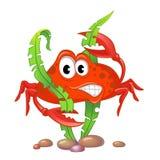 Cute cartoon crab and algae Royalty Free Stock Photography