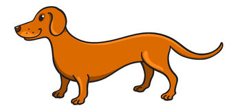 Cute cartoon dachshund Stock Photos