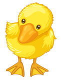 Cute cartoon duck Royalty Free Stock Image
