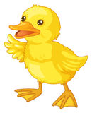 Cute cartoon duck Stock Images