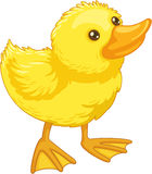Cute cartoon duck Royalty Free Stock Images