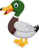 Cute cartoon duck Stock Image