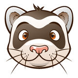 Cute cartoon ferret. Face of cartoon ferret on the white background. Look similar pets in my portfolio Royalty Free Stock Image
