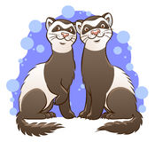 Cute cartoon ferrets. Vector illustration of two cute cartoon ferrets Royalty Free Stock Images