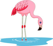cute Cartoon flamingo Stock Photo