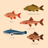 Cute cartoon flat fishes. Set of five river fish: rudd, european carp, gudgeon, catfish, carassius in flat style. River fish icons collection isolated. Cute Royalty Free Stock Photo