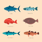 Cute cartoon flat fishes. Set of sea fish: scomber, codfish, flatfish, sea perch, salmon, tuna. Fish vector set in flat style design. Ocean, sea fish icons Stock Photos