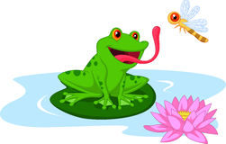 Cute Cartoon Frog Catching Dragonfly Stock Images