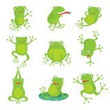 Cute cartoon frogs. Green croaking toad on lotus leaves in pond. Vector animal characters set. Of amphibian toad drawing, green frog collection illustration vector illustration