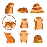 Cute cartoon hamster characters set, funny animal in different situations vector Illustrations. On a white background Stock Images