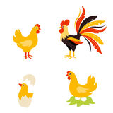 Cute Cartoon hen rooster and chicken baby. Stock Photos