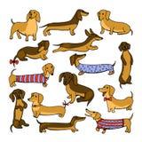Set of dog dachshund illustrations Stock Image