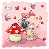 Cute cartoon Kitten with a camera Royalty Free Stock Images