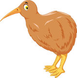 Cute cartoon kiwi bird posing Royalty Free Stock Image