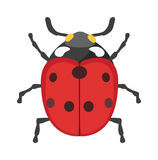 Cute cartoon ladybug vector insect isolated on white background. Stock Photography