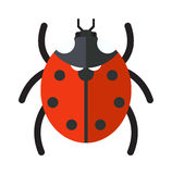 Cute cartoon ladybug vector insect isolated on white background. Stock Images