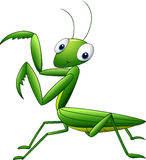 Cute cartoon mantis Royalty Free Stock Photo
