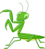 Cute cartoon mantis isolated on white background Royalty Free Stock Photography