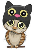 Cute cartoon owl in a Cat hat Royalty Free Stock Photography