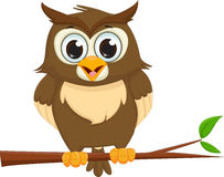 Cute cartoon owl sitting on a tree branch Stock Images