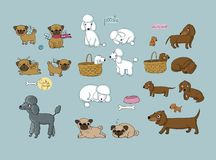 Cute cartoon pug, poodle and dachshund. Dogs and puppies. Funny animals - Vector. Illustration vector illustration