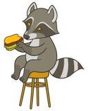 Cute cartoon raccoon holding big tasty sandwich Royalty Free Stock Photos