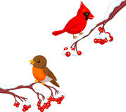 Cute cartoon robin bird and cardinal bird on the berry tree Stock Photography