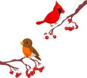 Cute cartoon robin bird and cardinal bird on the berry tree Stock Photography