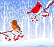 Cute cartoon robin bird and cardinal bird on the berry tree with winter background Royalty Free Stock Image
