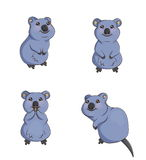 Cute cartoon smiling quokka animals in various poses Stock Image