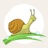 Cute cartoon Snail on grass Royalty Free Stock Image